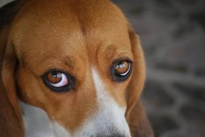 sad-eyes-sm1061079_40924804